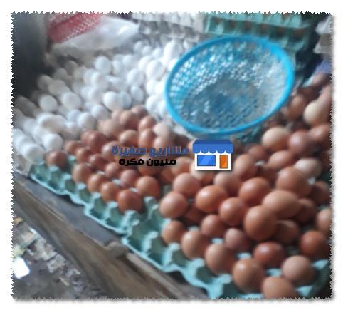 اسرار تجارة البيض